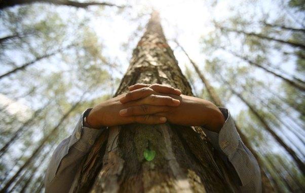copaci imbratisati 3