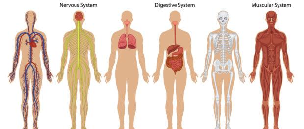 Imagini pentru corpul uman
