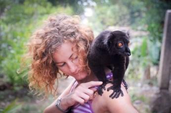 Lemure macaco