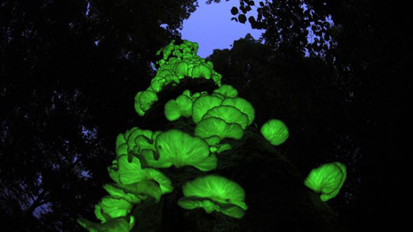 """cupcake punk bioluminescent mushrooms in the """"Glowing Forest"""""""