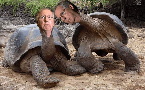 Mitch Mc Connell turtles