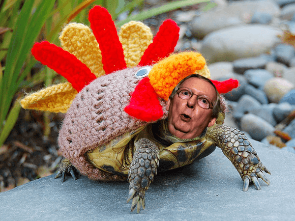 Mitch McConnell turtle in turkey sweater