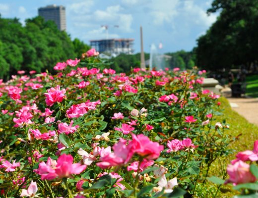 Hermann Park in Houston, Texas | www.cupcakesandthecosmos.com