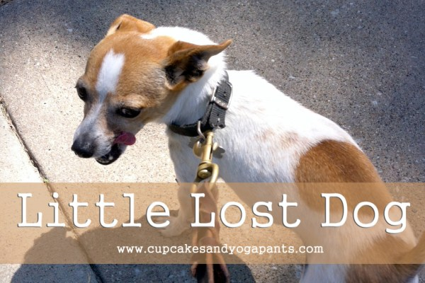 Little Lost Dog