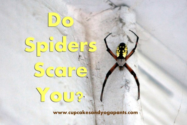 Do Spiders Scare You?