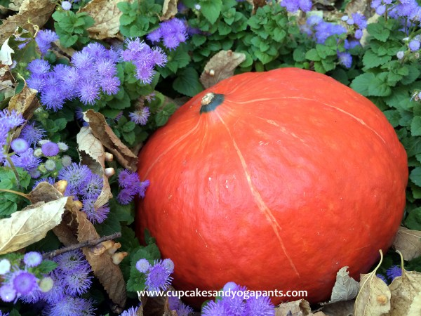 Discovering the Red Kuri Squash
