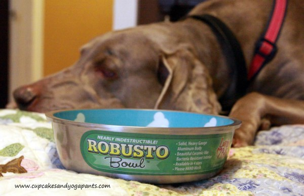 Love Your Dog! Trying Out Healthy New Dog Bowls