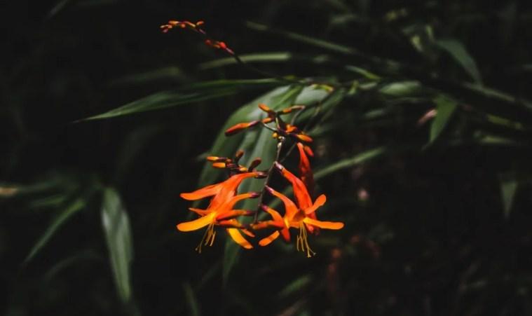 things to do in guayaquil ecuador botanical gardens