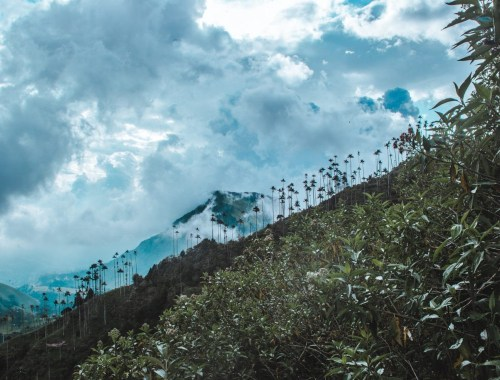 Mistake on the Cocora Valley Hike - Do not hike up the wrong mountain!   Valle de Cocora palm trees hiking routes   Salento Colo,bia travel guide by Cuppa to Copa Travels
