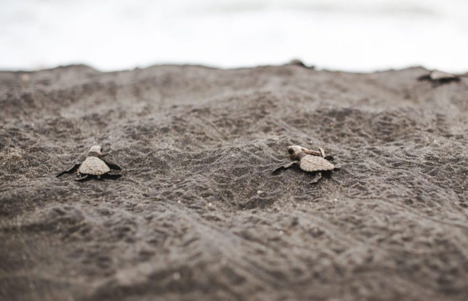 eco-friendly travel essentials for backpackers to save baby turtles