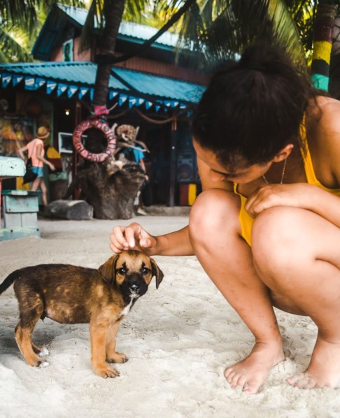 dog providencia beach: best ways to learn spanish for adults
