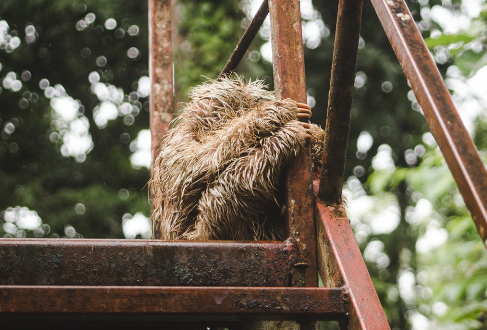 sloth on bridge: 11 things to know about costa rica wildlife