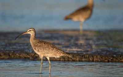 Santuario de la Naturaleza Humedal Río Maipo en alerta por ampliación del puerto de San Antonio