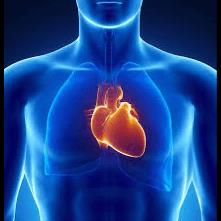 new heart palpita