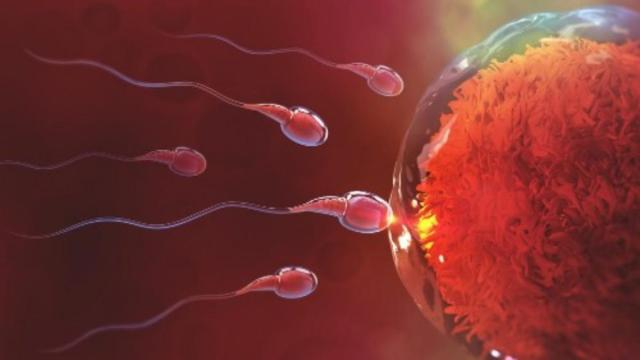 low sperm count (1)