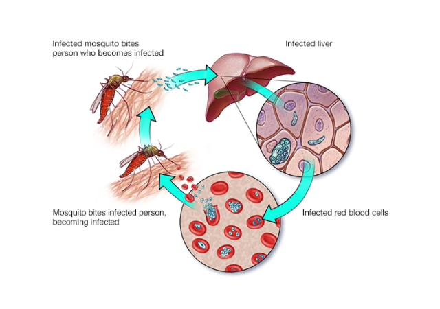 new malaria and typhoid