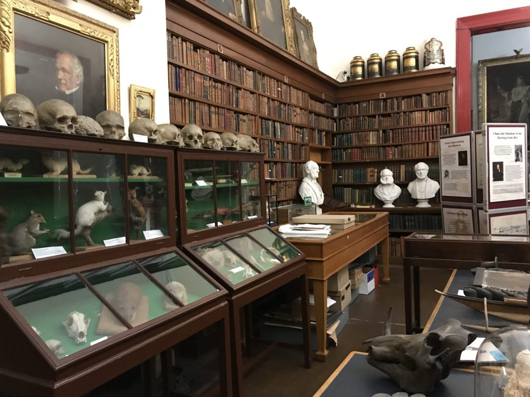 Display of a 19th century museum gallery in England with wooden cabinets displaying specimens and old remains, busts of famous men, a library of books and portraits.