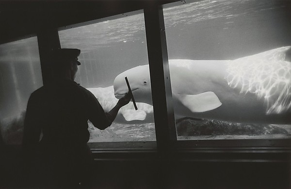 Garry Winogrand (American, 1928–1984) New York Aquarium, Coney Island, New York, 1967 Gelatin silver print;  The Metropolitan Museum of Art, New York,  (GW.CCP.037) http://www.metmuseum.org/Collections/search-the-collections/645683