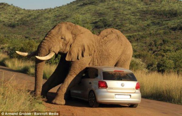 Elephant and Polo
