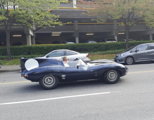 Jaguar D type side