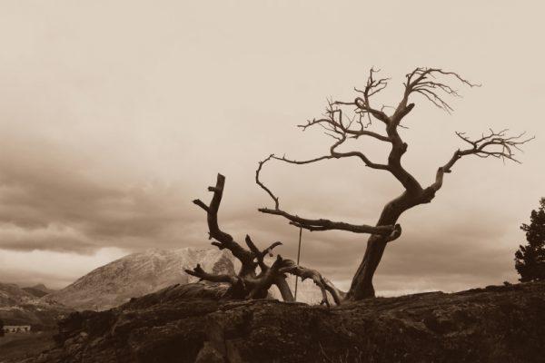 burmis-tree-1