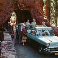 Photo: messynessychic.com What is it about large (OK, giant) trees that compels us to tunnel through their bases with our roads? It's not a new invention, certainly predating the automobile, and […]