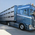 When transporting livestock, animal welfare and -health have become top priorities in the recent past. If the driving distance exceeds 65 km/40 miles, then the hauling company needs a license […]