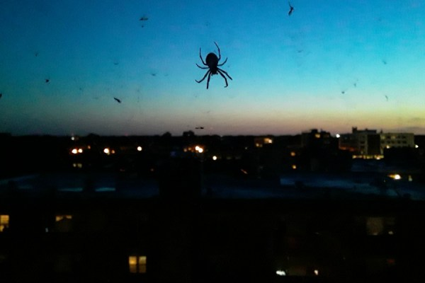 Spider Outside My Window. Sunday, June 7, 2020.