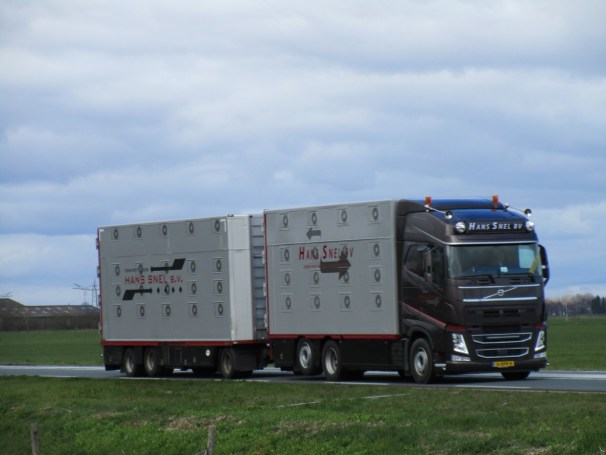 2020 Volvo FH with full trailer - livestock