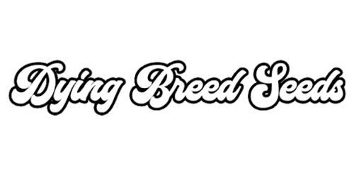 24 dying beed seeds