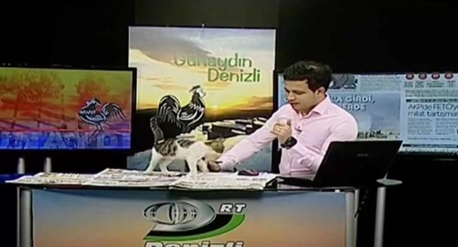 Gatinho-invade-telejornal-vídeo
