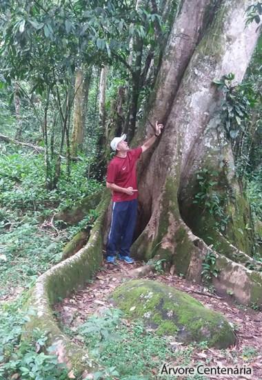 Ruínas da Lagoinha - Arvore Centenária