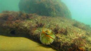 Trilha Subaquática Ilha Ancjhieta