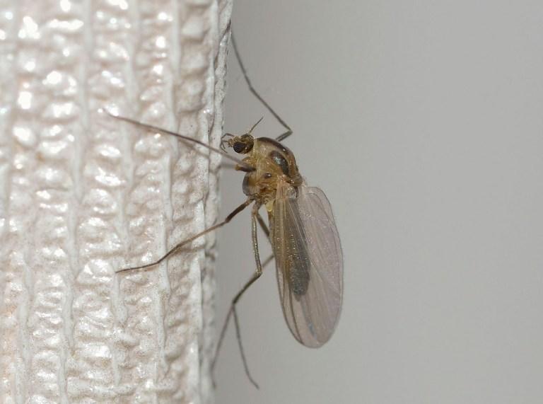 Remedios contra los mosquitos en casa
