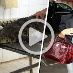Vídeo clandestino expone el horrible origen de algunos bolsos y zapatos de lujo
