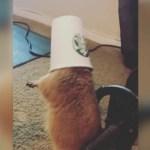 Vídeo muestra perro de las praderas con la cabeza atrapada en la taza