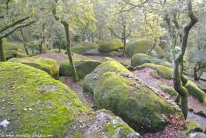 Ambiance mystique sur les hauteurs de Guimaraes, Portugal
