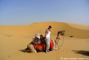 dromadaire dans les dunes de sable