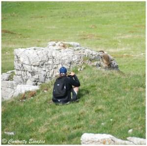 Marmottes au Monte Baldo