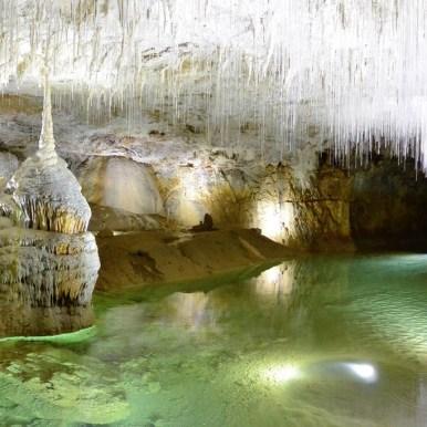 Des milliers de fistuleuses à la Grotte de Choranche