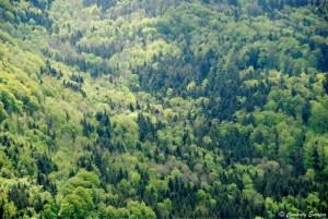 Forêt Noire vue depuis le château de Hohenzollern