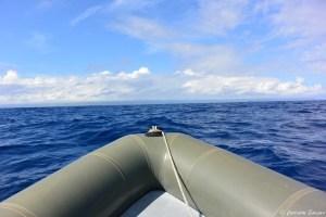 Sortie en mer à Pico, Açores