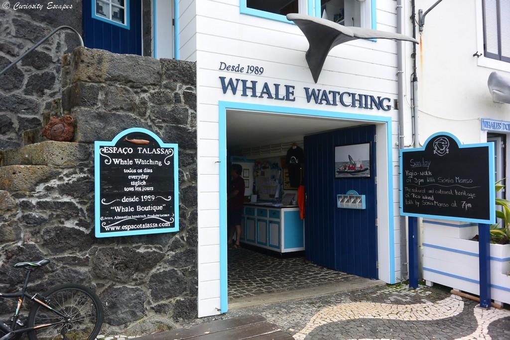 Observation des baleines chez Espaço Talassa, Açores