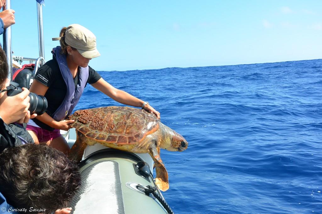 Tortue marine aux Açores