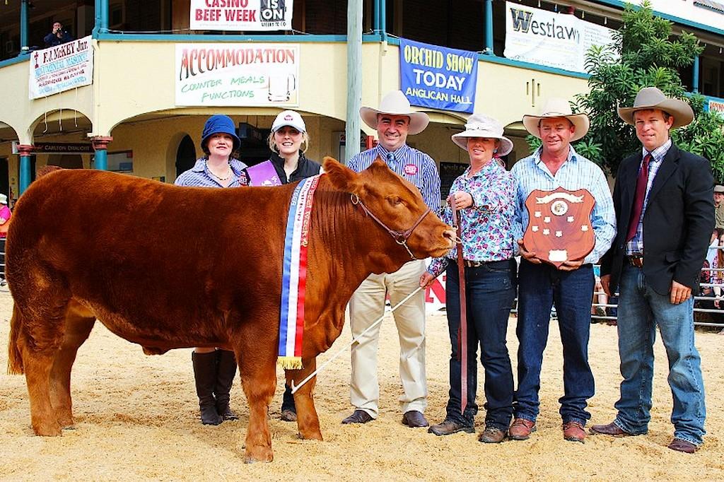 Défilé de vaches pendant Beef Week à Casino