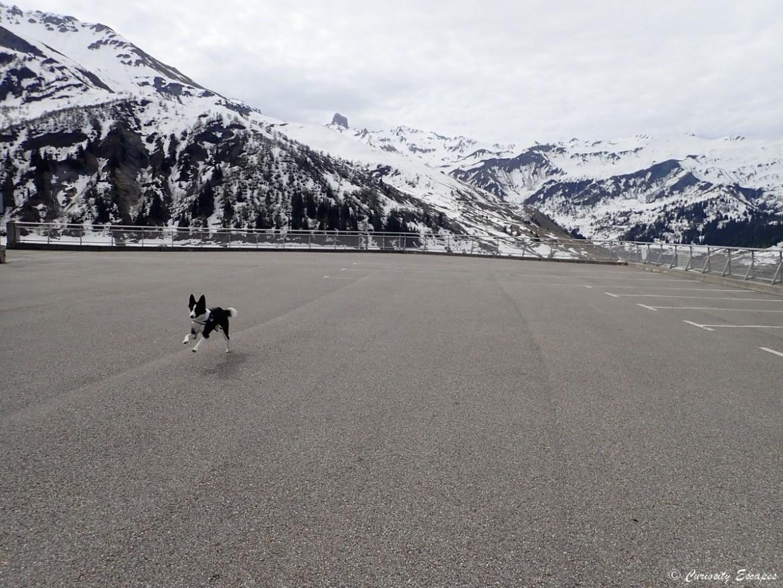 Chien au barrage de Roselend