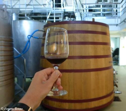 Dégustation de vins sur Pico