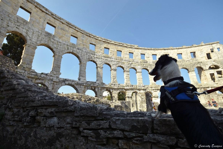 Amphitéâtre de Pula avec son chien en Istrie croate