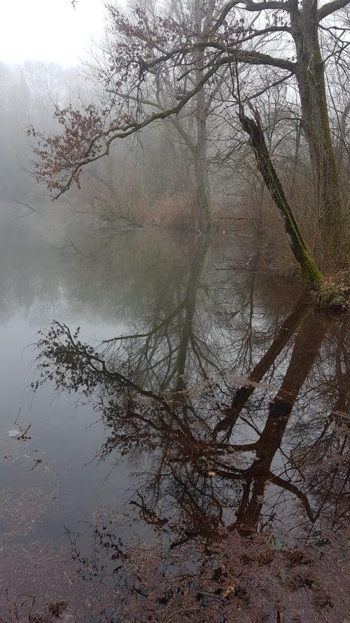 Reflets sur l'étang de Boulieu, Isère