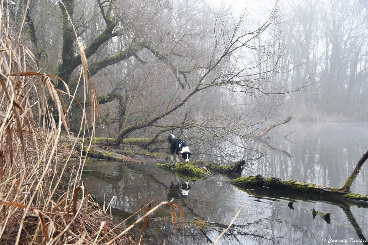 con il suo cane con Pond Bulieu'étang de Boulieu